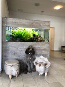 Gitti-Aquarium
